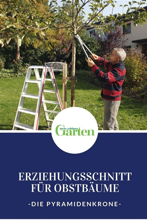 Obstbaeumchen Pflanzen Schritt Fuer Schritt by Erziehungsschnitt Aufbau Einer Pyramidenkrone G 228 Rtnern