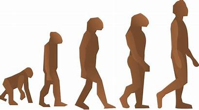 Clip Evolution Human Clipart Steps Humana Evolve