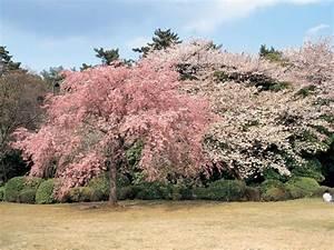 The beautiful Korea Scenery