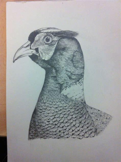 pencil drawing   pheasant drawing   pencil