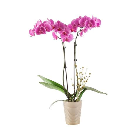 just add orchids 5 in orchid in ceramic 270781 the home depot