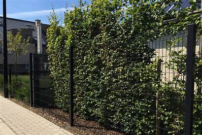 Fence Panels Wire Garden Placement Examples