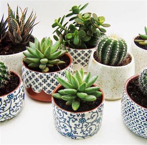 plantas mini  la oficina kena