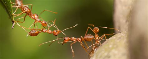 study ants rarely  sick  theyre masters