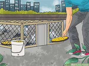 How To Trap Pigeons  12 Steps  With Pictures