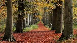 Nature, Fall, Trees, Leaves, Forest, Path, Wallpapers, Hd, Desktop, And, Mobile, Backgrounds
