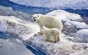 polar family baby snow wallpaper widescreen