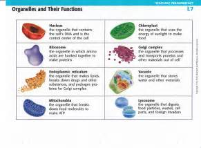 Plant Cell Organelles and Their Functions