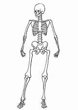 Coloring Pages Skeletons Skeleton sketch template