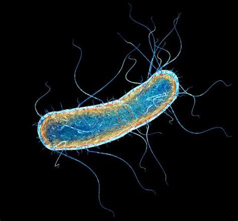encyclopédie larousse en ligne bactérie