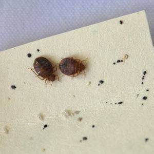 quotdon39t let the bedbugs bitequot beds blog With bedbugs on bed