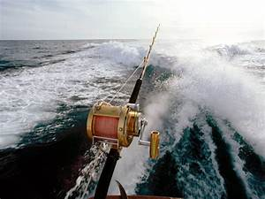Sport fishing wallpapers and images - wallpapers, pictures ...