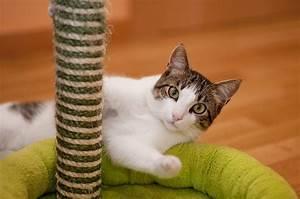 Katzen Fernhalten Von Möbeln : katze zerkratzt m bel was wirklich dagegen hilft ~ Michelbontemps.com Haus und Dekorationen