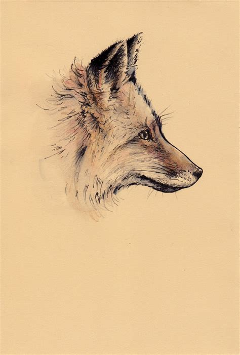 animals art draw drawing fox favimcom jpg