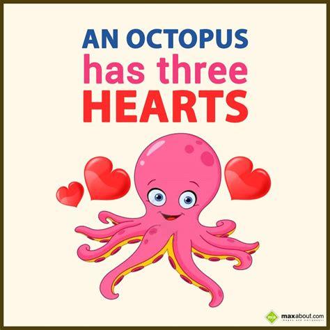 an octopus has three hearts 593 | an octopus has three hearts animals