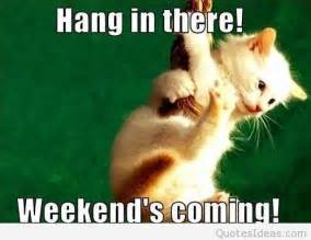hang in there cat hang in there weekend is coming photo with a cat