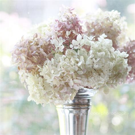 shabby chic photography pretty flower bouquets shabby chic photography by sylvia cook