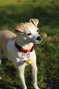 Go Dogs Go Happyhazel Happy 1 Year Blog Anniversary