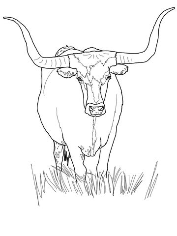 texas longhorn cattle coloring page supercoloringcom