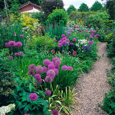 allium plant profile