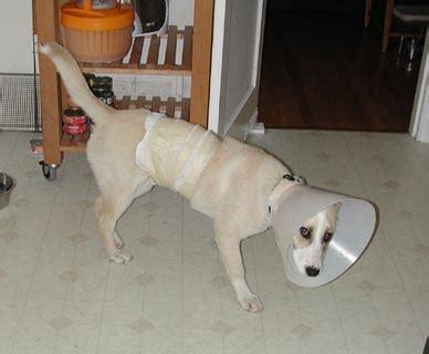 alternative  elizabethan collar pet project