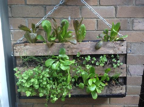 Used In Vertical Gardens by 10 Diy Garden Ideas For Using Pallets Greenhouses Nz