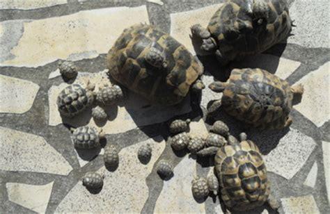 tortues terrestres les choses de la vie naissance en