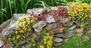 Pflanzen Auf Stein : natursteinmauern bepflanzen mein sch ner garten ~ Frokenaadalensverden.com Haus und Dekorationen
