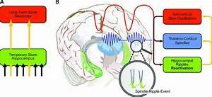 [Medical Article : Physiological Cross Talk Between Sleep ...