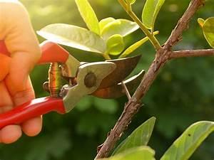 When, To, Prune, Plants, U2013, Best, Pruning, Times, For, Garden, Plants
