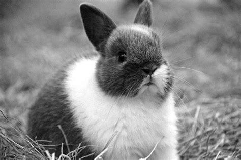 cute  lovable photographs  rabbits incredible snaps