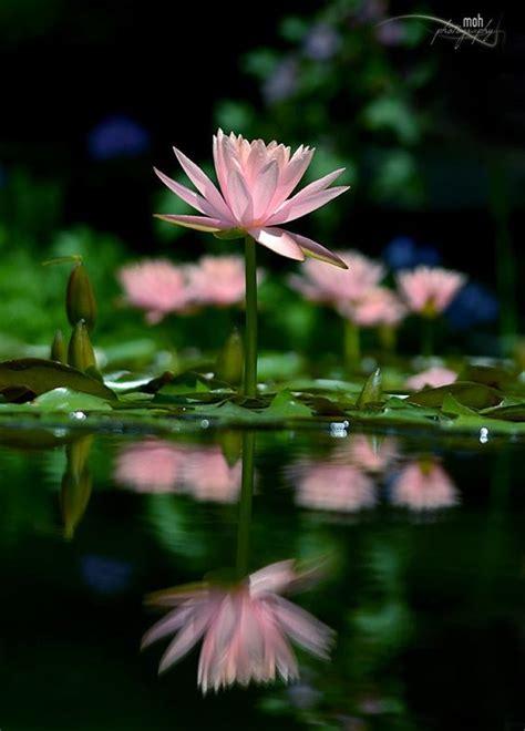 Most Beautiful Flowers Beautiful Flowers And Beautiful
