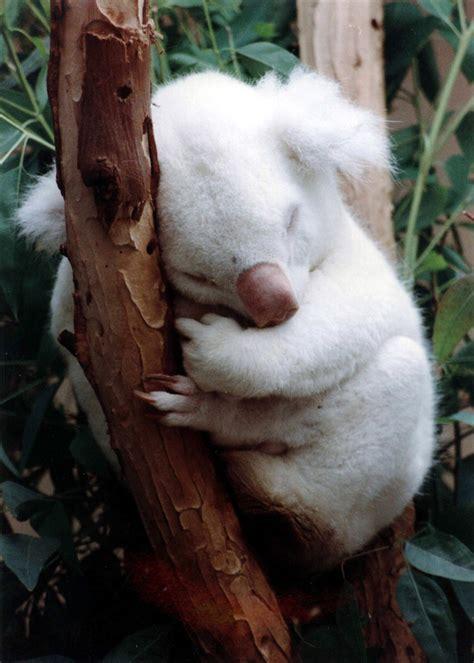 rare albinos   world  animals wow
