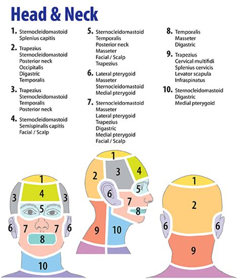 searching  trigger points tips  consistently relieve pain massage therapy trigger
