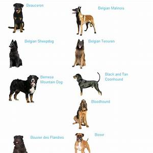 Big dog breeds list of popular big and large dog breeds for List of large dog breeds