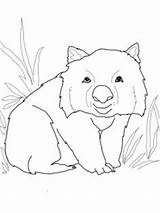 Wombat Coloring Pages Colouring Printable Stew Crafts Funny Printables Australia Sheets Drawing Clipart Storytime Australian Aboriginal Drawings Books Diary Doodle sketch template