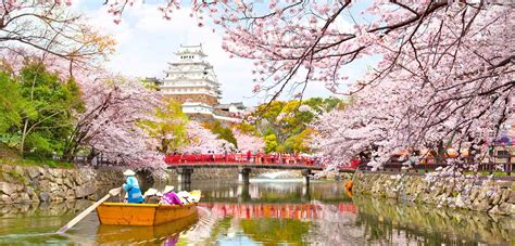 potret kecantikan bunga sakura  jepang romantis