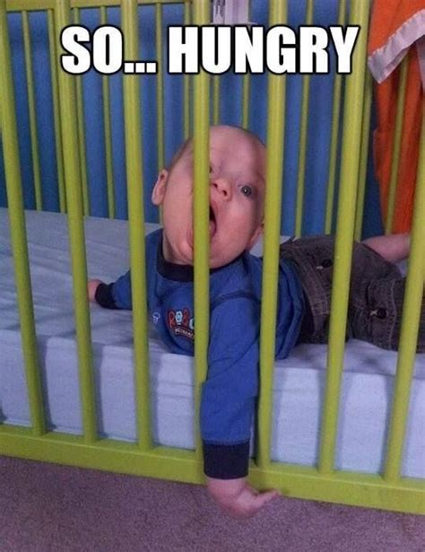 Funny Hungry Meme - funny hungry meme www imgkid com the image kid has it