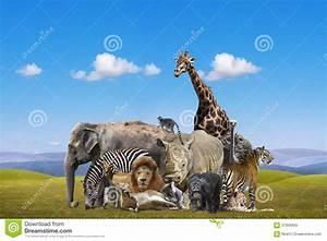 Wild Animals Group Royalty Free Stock Photo - Image: 37000655