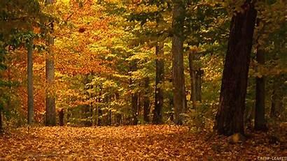 Fall Autumn Seasons Gifs Mp4 Reddit Sd