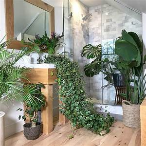 Create, A, Relaxing, Tropical, Vacation, At, Home, With, Indoor, Plants