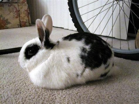 understanding  rabbit wabbitwiki