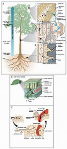 Cells Communicate By Sending And Receiving Signals Via The Environment Or From Other Cells  The
