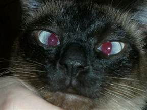 cat s eye file cat s jpg