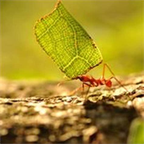eliminare le formiche dal giardino invasione di formiche domande e risposte giardinaggio
