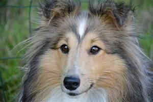 Comment Savoir Si L On Est Enceinte : comment savoir si ma chienne est enceinte ~ Dode.kayakingforconservation.com Idées de Décoration