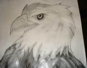 Eagle Head Drawings