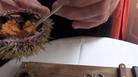 oursin cuisine technique de cuisine ouvrir un oursin planète québec