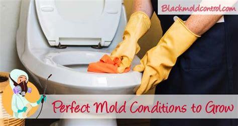 remove black mold  toilet bowl tank  seat