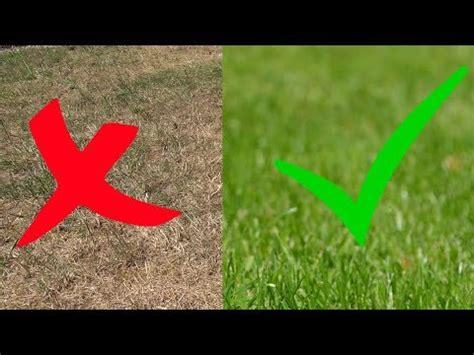 Vertrockneten Rasen Retten by Rasen Vor Hitze Und Trockenheit Sch 252 Tzen Verbrannten